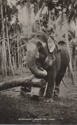 Elephant Carrying Logs Colombo ?