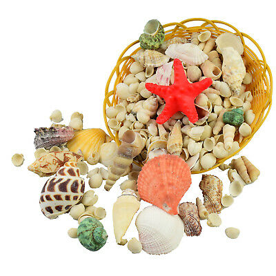 Mixed Sea Shells Large Table Decoration Wedding Aquarium Shells Weights Craft