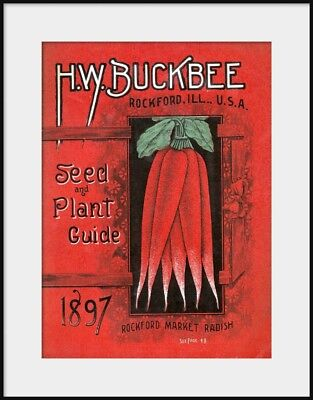 H W BUCKBEE 1897 Seed and Plant Guide cover, Radishes, NEW Fine Art Giclee Print