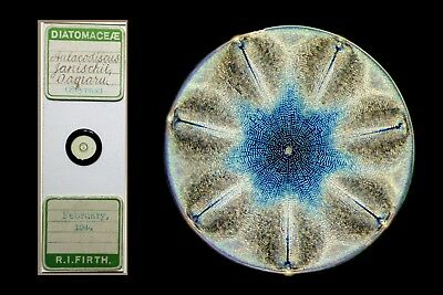 Antique Microscope Slide ~ Selected Diatom ~ Aulacodiscus Janischii ~ RI Firth