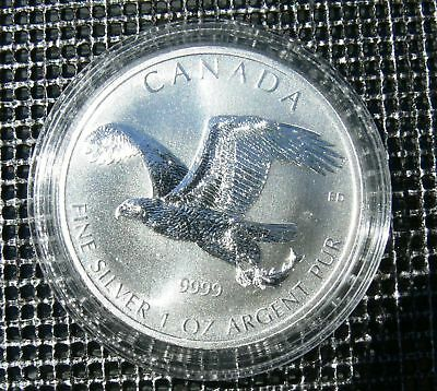 5 Dollars Kanada Silber  Birds of Prey  Bald Eagle 2014 BU in Kapsel