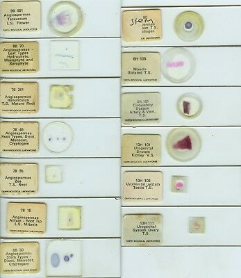 13 Biology Microscope Slides by Griffin Biological Labs