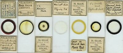 7 Animal Hair Microscope Slides by H. Ellis