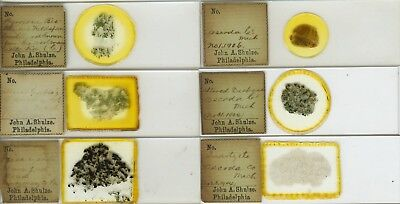 6 Mineral Microscope Slides by J.A. Shulze (American)