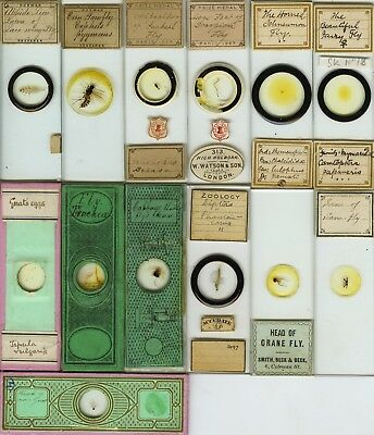 13 Fly Microscope Slides by Various Makers