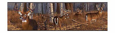 White Tail Deer in Birch Tree Forest Wallpaper Border FZ4460BD