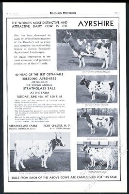 1930 Ayrshire cow 5 champion cows photo vintage print ad