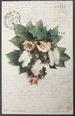 News Orleans, Louisiana Cotton Blossoms, 1907 Post Card