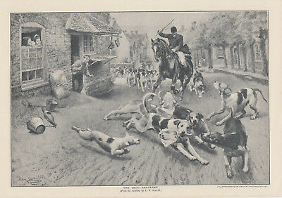 Equestrian Fox Hunting Foxhunt Foxhound Dogs Hunting Horse Antique Print 1910