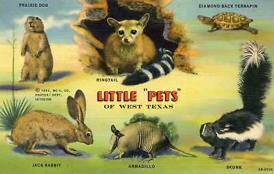 """West Texas """"Little Pets"""" animals found in the area vintage 1940's linen postcard"""