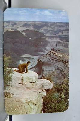 Arizona AZ Grand Canyon Girl Point Postcard Old Vintage Card View Standard Post