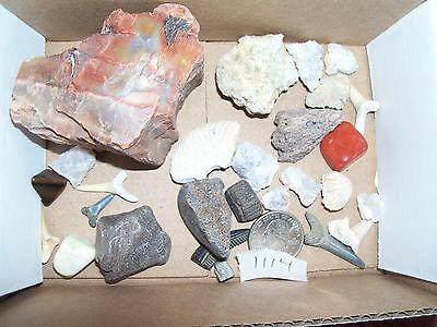 .75 pound lbs of gemstones and fossils. Free shipping