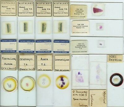 14 Histology Microscope Slides by British Makers