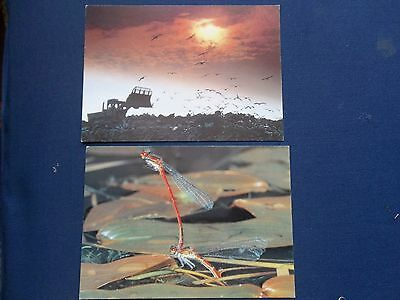 2 NATIONAL POSTAL MUSEUM POSTCARDS SS39a/b SEAGULLS DAMSEL FLY COMPETITION WINS