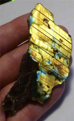 A+ BLUE & YELLOW Labradorite Slab gemstone for cabochons 194cts
