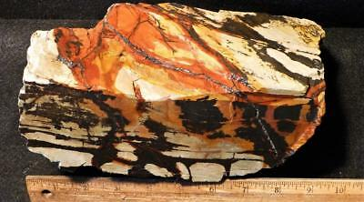 ORCA: Old Collection Mojave Paint Faced Rough 11 1/4 Pounds