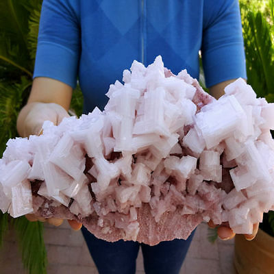 Very Fine Big 11 1/2 Inch Gallery Size Pink Halite Crystal Cluster