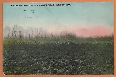 ID Idaho Weiser Prune Orchard Alfalfa Field Washington County Postcard