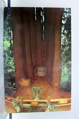 California CA Trees of Mystery Cathedral Tree Redwood Highway Postcard Old View