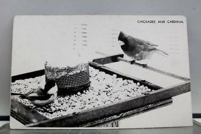Animal Bird Black Capped Chickadee Postcard Old Vintage Card View Standard Post