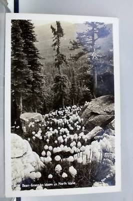 Idaho ID North Bear Grass Bloom Postcard Old Vintage Card View Standard Souvenir