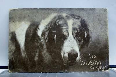 Animal Dog Buffalo I'm Thinking of You Postcard Old Vintage Card View Standard