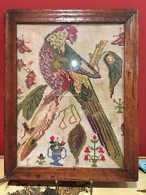 Antique Wool Work ,embroidery Picture Of A Parrot In Early Walnut Veneered Frame