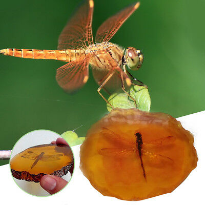 Beautiful Amber Dragonfly Fossil Insects Manual Polishing butterfly Decoration