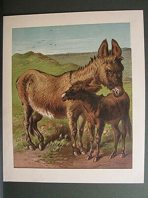 DONKEY WITH FOAL IN MEADOW EQUINE HORSE ANTIQUE PRINT 1870 by HARRISON WEIR