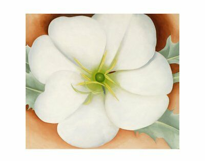1946 by Georgia O/'Keeffe 34x28 1 FLORAL ART PRINT White Flower on Red Earth No