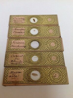 Collection Of 5 Antiques Microscope Slides By J. Bourgogne In Original Case