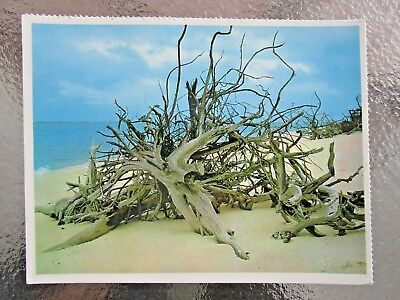 Postcard Driftwood On North West Island Great Barrier Reef Qld - Postage $1.50