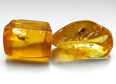 2 GENUINE FOSSILISED INSECT IN AMBER circa 44 million BC