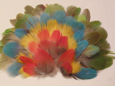 Carolyn's-200-1in. by 2in. Parrot Body Feathers-1721