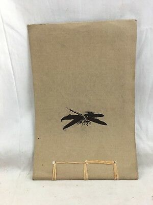 Orig. 1912 Arts & Crafts Hand Made Insect Life Butterflies U Lowell MA Scrapbook