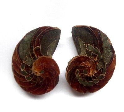 66 CT AAA Quality Ammonite Fossal Natural Loose Gemstone 2 Piece(pair) 33x18 mm