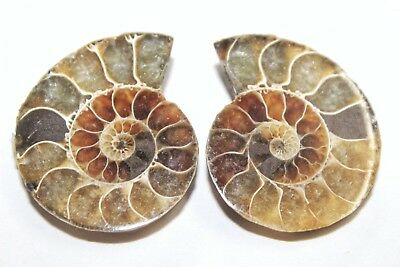 AAA Quality Ammonite Fossal Natural Loose Gemstone 2 Piece(pair)35x28mm 113Ct