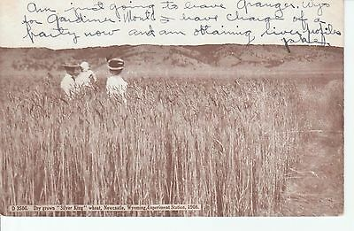 """1909 Dry Grown """"Silver King"""" Wheat in Newcastle WY Wyoming PC"""