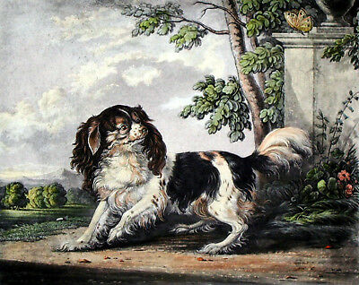 Vintage Painting Print Dog Cavalier Spaniel Rare Ready To Hang On Canvas