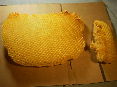 honey comb bee's wax natural wild specimens beautiful 2 pieces 9 1/2 inches