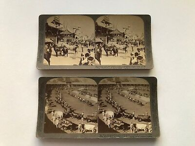"2 Vintage Stereoview Cards - ""Fine Horses"" -Cattle Prize Winners -1905 St. Louis"