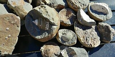 Fossils, Fosilized Bone, Wood,clams, Snails, Plants, My Personal Collection. C P