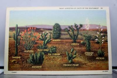 Scenic Southwest Cacti Varieties Postcard Old Vintage Card View Standard Post PC