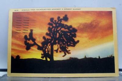 Scenic Desert Sunset Joshua Tree Postcard Old Vintage Card View Standard Post PC