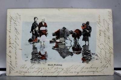 Scenic Shell Picking Postcard Old Vintage Card View Standard Souvenir Postal PC