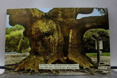 Scenic Major Oak Sherwood Forest Edwinstowe Postcard Old Vintage Card View Post
