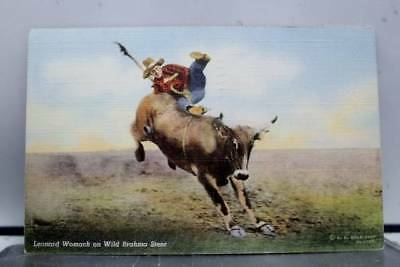 Scenic Leonard Womach Wild Brahma Steer Postcard Old Vintage Card View Standard