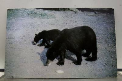 Great Smoky Mountain Park Black Bear and Cub Postcard Old Vintage Card View Post