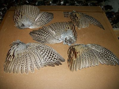 5 fanned pheasant wings feathers dog training crafts fly tying native art dried