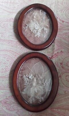 A Pair of Antique Victorian Seaweed & Ferns Shadow Box Pictures ~ 1860 Folk Art